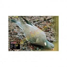 Blason MAXIMAL Pigeon